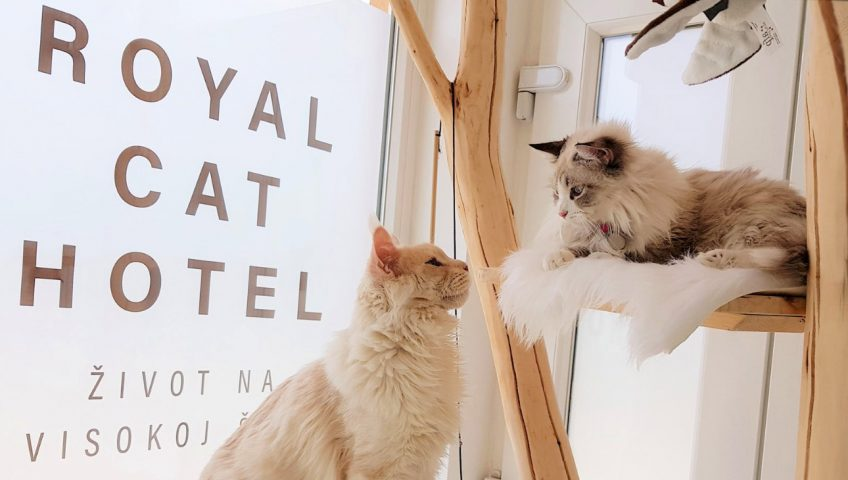 Čuvanje mačaka na visokoj šapi!
